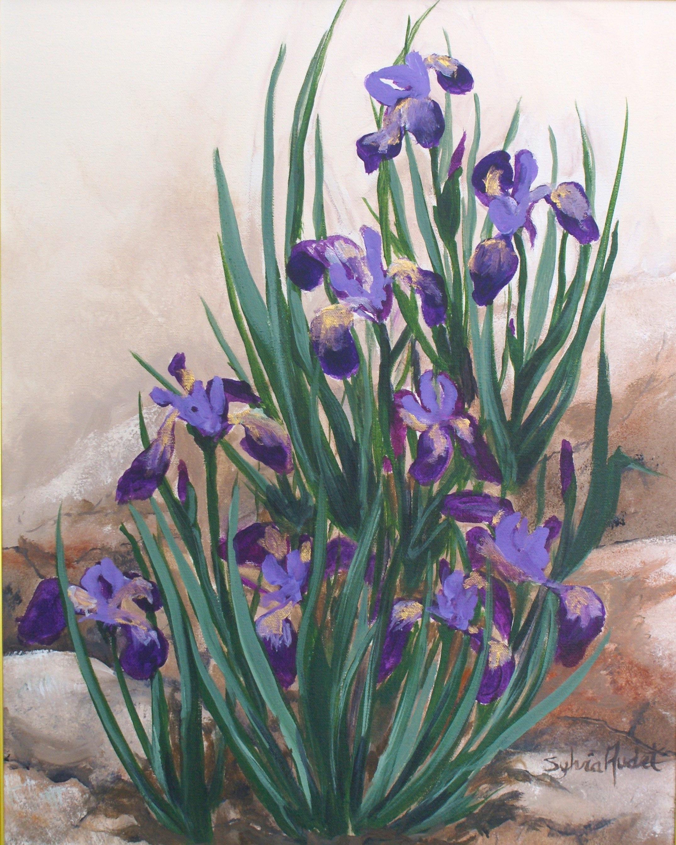 Iris d'Émilie
