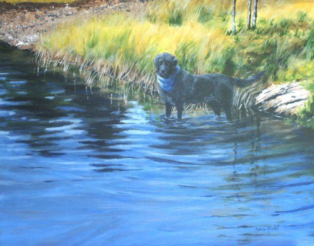 Kelly (Labrador)