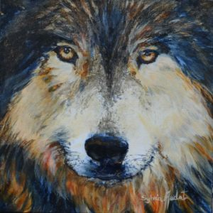 Regard inquiet du loup