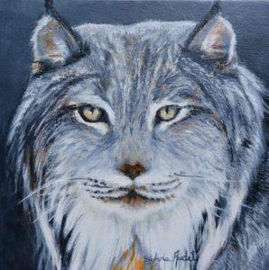 Regard farouche du lynx