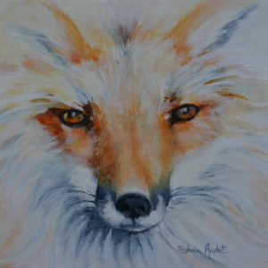 Regard méfiant du renard